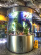 aquarist photo by rudy rosen